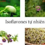 Isoflavon có trong thực phẩm nào trong tự nhiên? Tác dụng của Isoflavon đối với sức khỏe phụ nữ