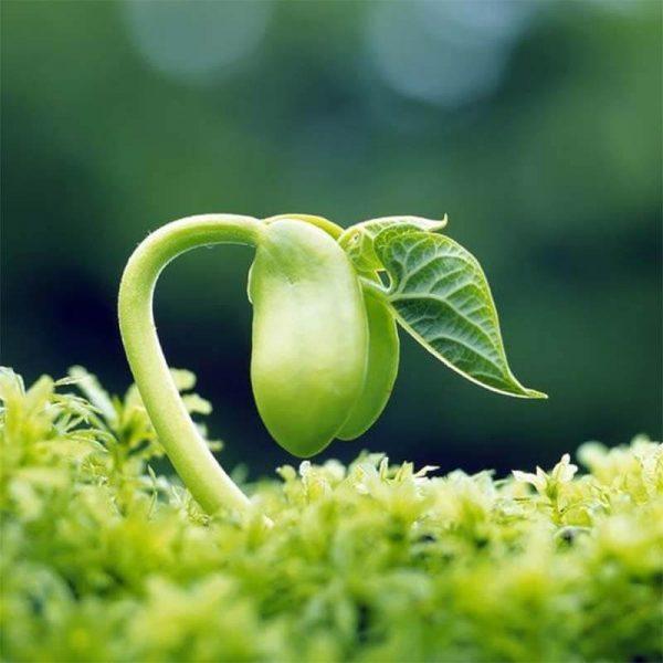 isoflavon có trong thực phẩm nào, isoflavones có trong thực phẩm nào, estrogen thực vật, thực phẩm giàu isoflavone, thực phẩm có chứa isoflavones, thực phẩm bổ sung isoflavone