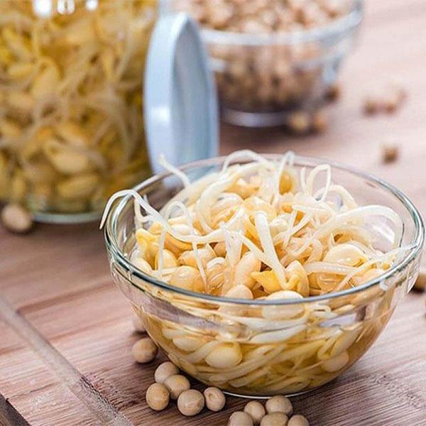 rau mầm đậu nành, cách làm rau mầm đậu nành,mầm đậu nành,hướng dẫn làm rau mầm đậu nành,công dụng của rau mầm đậu nành