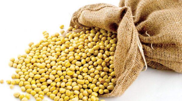 cách ủ mầm đậu nành không bị thối tại nhà, cách ủ mầm đậu nành tại nhà, cách ủ mầm đậu nành chuẩn, hướng dẫn ủ mầm đậu nành