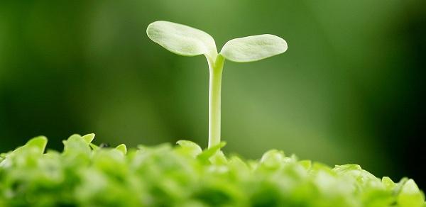 Viên mầm đậu nành có tăng vòng 1 không, cách pha, webtretho, loại nào tốt, uống, bao lâu, kích thước, giá bao nhiêu